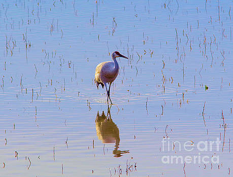 Sandhill and reflection by Jeff Swan