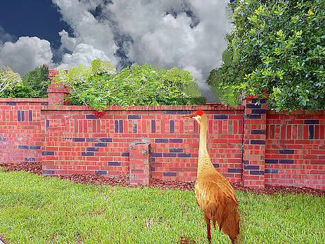 Sandhill Crane stops at a wall by Joan Mansson
