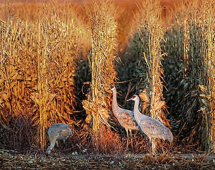 Sandhill Cranes at Sunrise by Britt Runyon