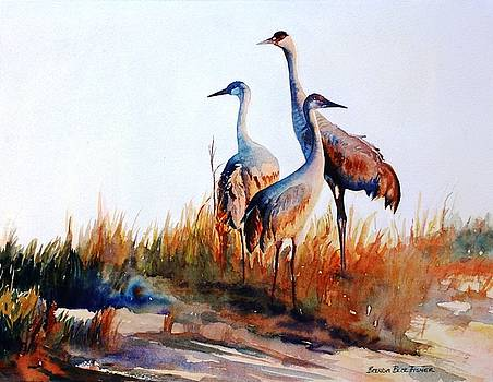 Sandhill Cranes by Brenda Beck Fisher