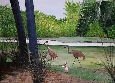 Sandhill Cranes Florida by Mary Ann Leake