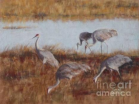 Sandhill Cranes, Morning Feeding by Jymme Golden