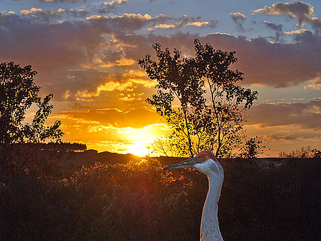 Sandhill Sundown by Adele Moscaritolo