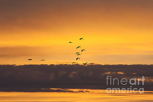 Sandhills at Sunset by Scott Wood
