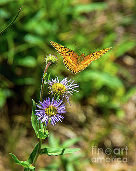 Sandia Butterfly by Stephen Whalen