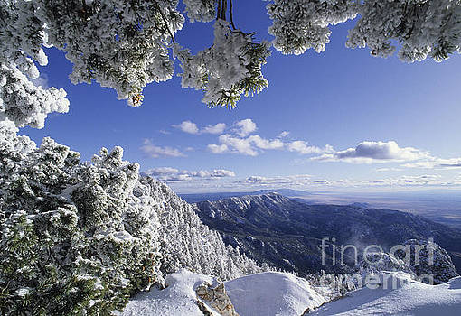 Sandia Mountain Wilderness- New Mexico by Kevin Shields