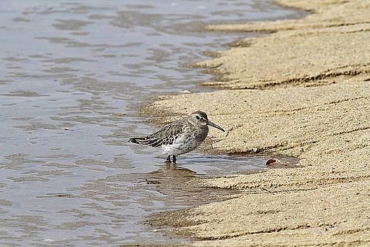 Sandpiper at the Shore by Linda Crockett