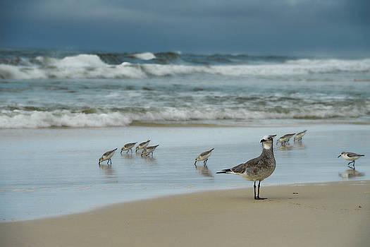 Sandpiper Beach by Renee Hardison