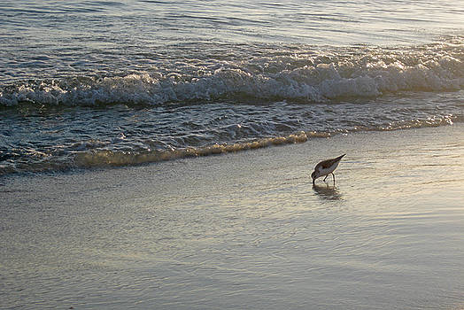 Sandpiper in the Surf by Jim Clark