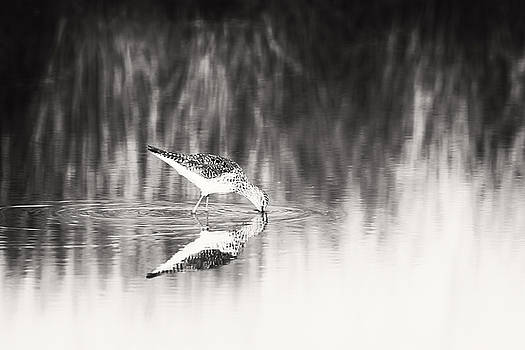 Sandpiper by Michael McStamp