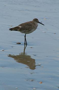 Sandpiper Reflections by Beth Andersen