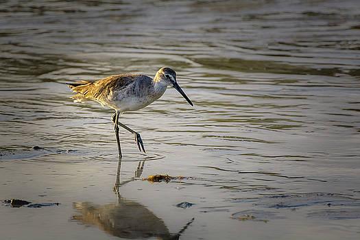 Sandpiper by Robert Mitchell