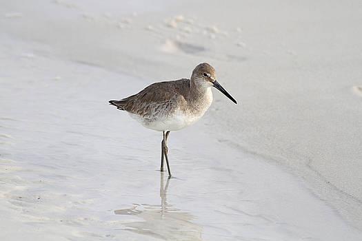 Sandpiper Stroll by Jim Clark