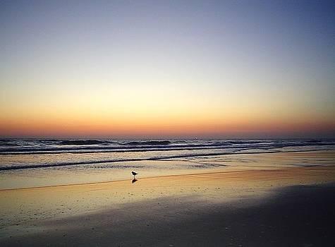 Sandpiper Sunrise by Cheryl Waugh Whitney