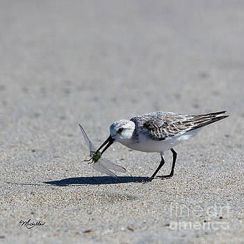 Michelle Constantine - Sandpiper With Dragonfly