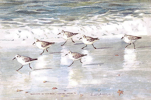 Sandpipers on Siesta Key by Shawn McLoughlin