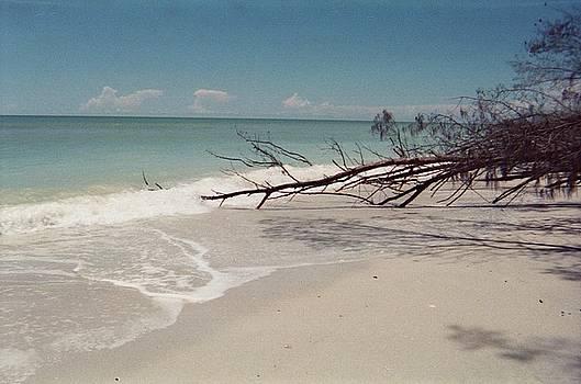Sanibel Beach II by Anna Villarreal Garbis