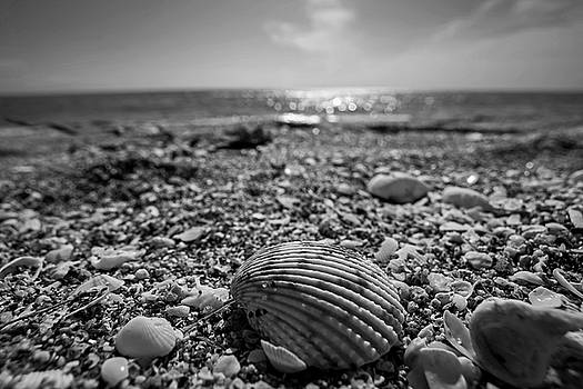 Toby McGuire - Sanibel Island Sea Shell Fort Myers Florida Black and White