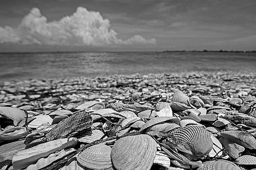 Toby McGuire - Sanibel Island Sea Shell Fort Myers Florida Clouds Black and White