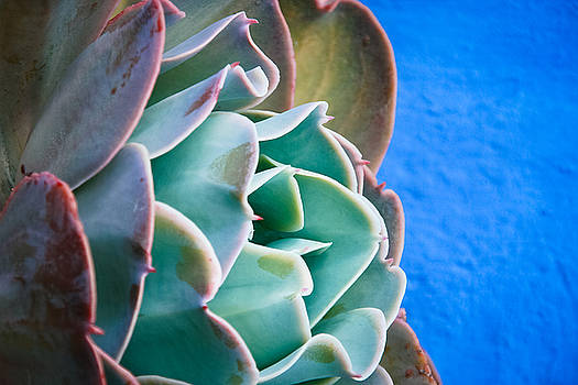 Jonathan Hansen - Santa Catalina Flower 1