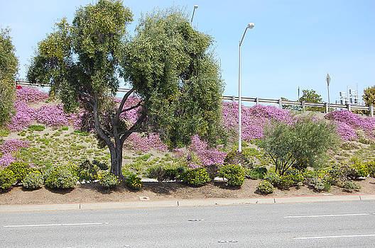 Santa Clara springtime by Carolyn Donnell