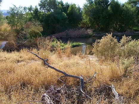 Kathleen Heese - Santa Cruz Wetlands