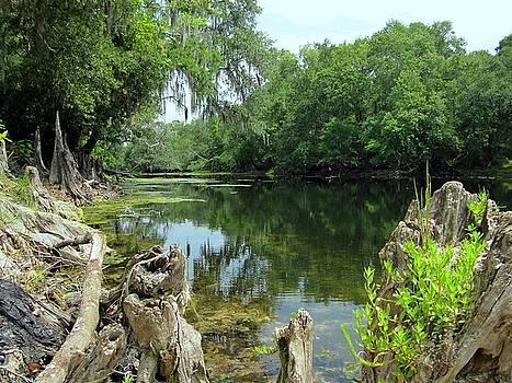 Santa Fe River by Pam Utton