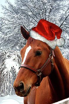 Santa Horse by Alynne Landers