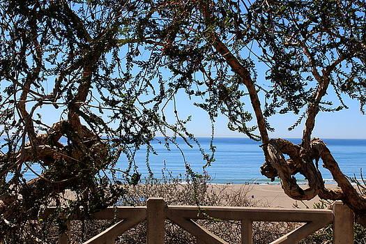 California Dreaming by Maureen Jordan