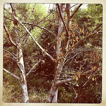 Santa Rosa Creek 2 by Sharon Green