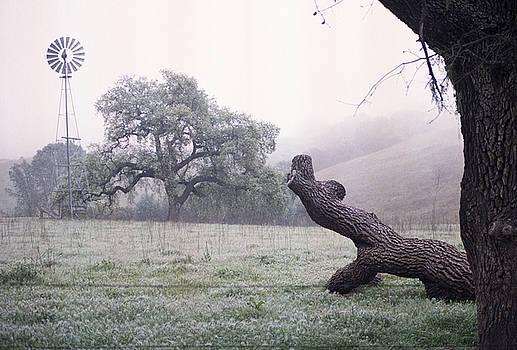 Balanced Art - Santa Yenez Meadow