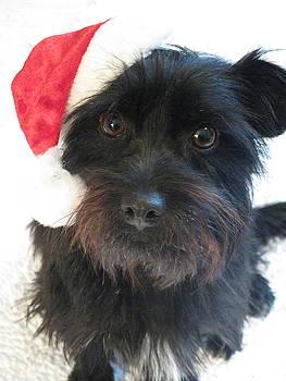 Santa's Little Helper by Chris Koval