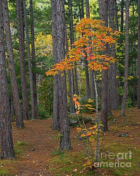 Sappling in Forest by Robin Clifton