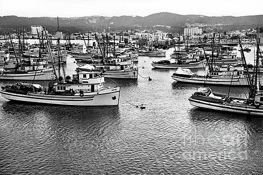 California Views Mr Pat Hathaway Archives - Sardine purse seiners Fishing Fleet At Anchor, Monterey Bay Aug. 1946