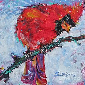Sassy Cardinal by Susan Davies