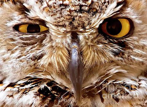 Sassy Owl by Bill Frische
