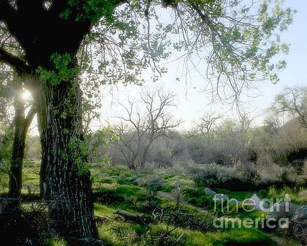 Jenny Revitz Soper - Saturday Meadow