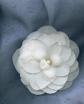 Marsha Tudor - Saturday Night Camellia