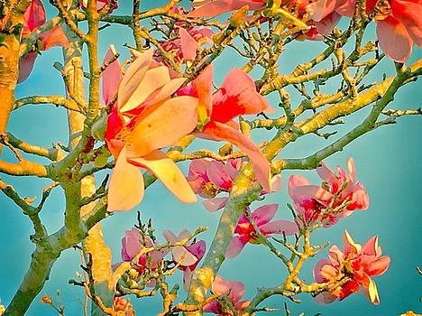 Saucer Magnolia by Angela Annas