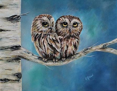 Saw Whet Owl by Edie Reed
