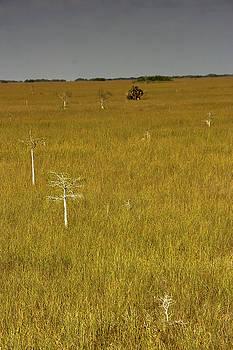 Jonathan Hansen - Sawgrass Prairie 1