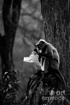 Say NO to Plastics by Pravine Chester
