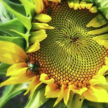 A Japanese Beetle Posing on a Sunflower by Phunny Phace