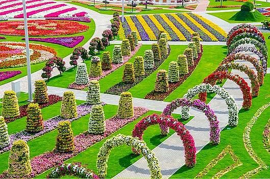 S.BasavaRaj Ireland - Dubai Miracle Garden by S BasavaRaj Ireland