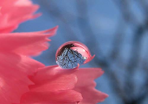 S.Basavaraj Ireland - The sky is reflected in a drop of water. by S BasavaRaj Ireland