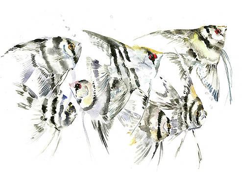 Scalar, Anbelfish Aquarium fish by Suren Nersisyan