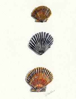 Scallop Shell Trio by Sheryl Heatherly Hawkins