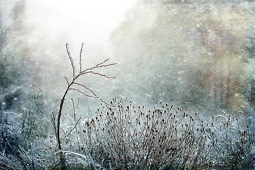 Scandinavian Light by Randi Grace Nilsberg