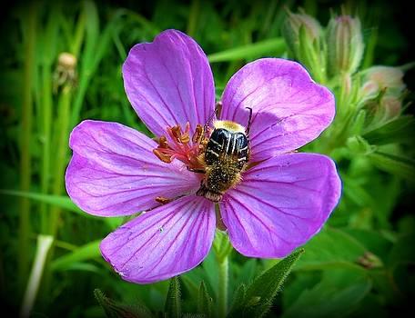 Leah Grunzke - Scarab Beetle