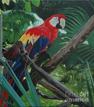 Scarlet Macaw by Michael Nowak